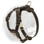 Fashionable Handcrafted Leather Harness for Dogue de Bordeaux Puppies