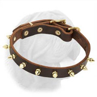 Multifunctional Amazing Spiked Dogue de Bordeaux Collar