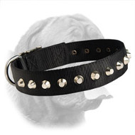 Gorgeous Wide Nylon Dogue de Bordeaux Collar With Nickel Plated Pyramids