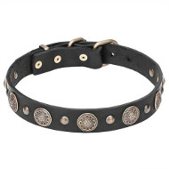 Stylish Leather Dogue de Bordeaux Collar with Brass Circles and Small Studs
