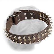 Incredible Dogue de Bordeaux Decorated Leather Collar
