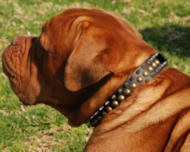French Mastiff - 3 Rows Leather Spiked and Studded Dog Collar