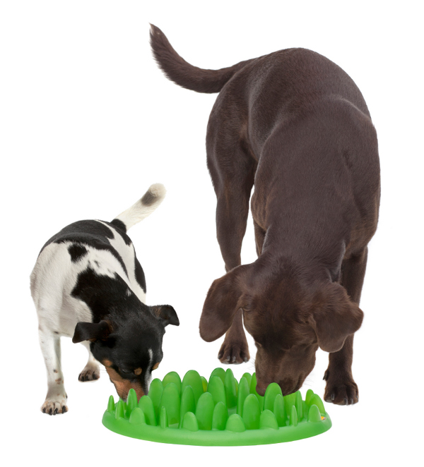 Interactive Dogue de  Bordeaux Puppy Feeder for Two Dogs