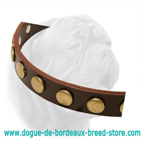 Dogue De Bordeaux 1 Inch Wide Leather Buckle Collar For