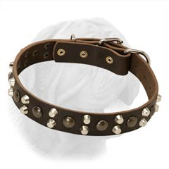 Wide Leather Dogue de Bordeaux Buckle Collar Decorated with Spikes and Studs