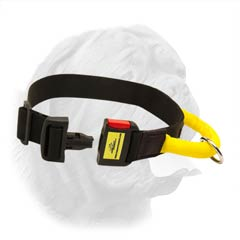 Reliable Nylon Collar with Specially Constructed Quick Release Buckle for Walking and Training