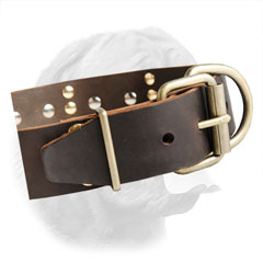 Durable Brass Buckle on French Mastiff Collar with Spikes and Plates