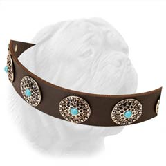 Fashionable Wide Leather Collar with Silver Plated Circled Settings Holding Turquoise Color Stones