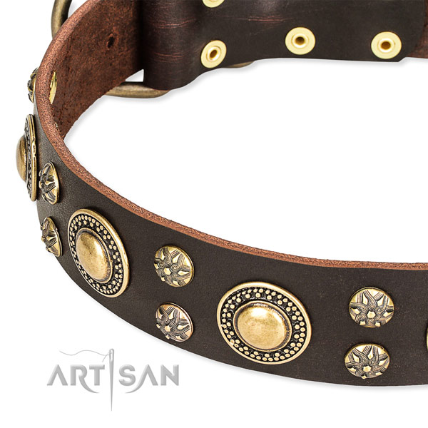 Leather dog collar with fashionable adornments