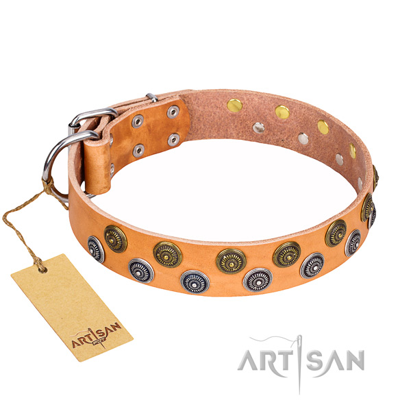 Stunning full grain genuine leather dog collar for daily walking