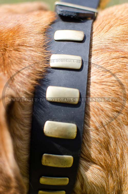 Durable Wide Leather Collar for French Mastiff with Narrow Plates Broadwise