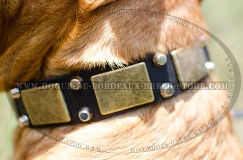 Durable Leather French Mastiff Collar with Plates and Studs