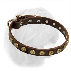 Narrow Dog Collar for French Mastiff with Dotted Studs