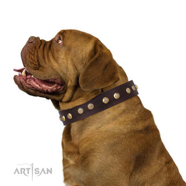 Exceptional decorations on fancy walking full grain leather dog collar