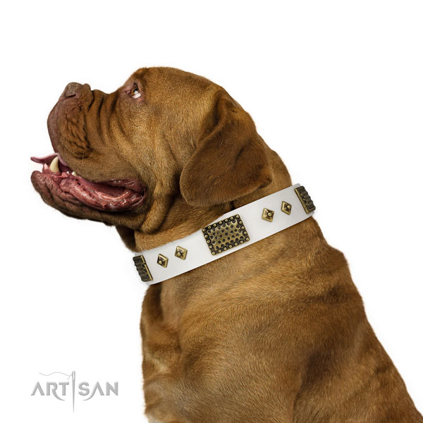 Walking dog collar of natural leather with awesome studs