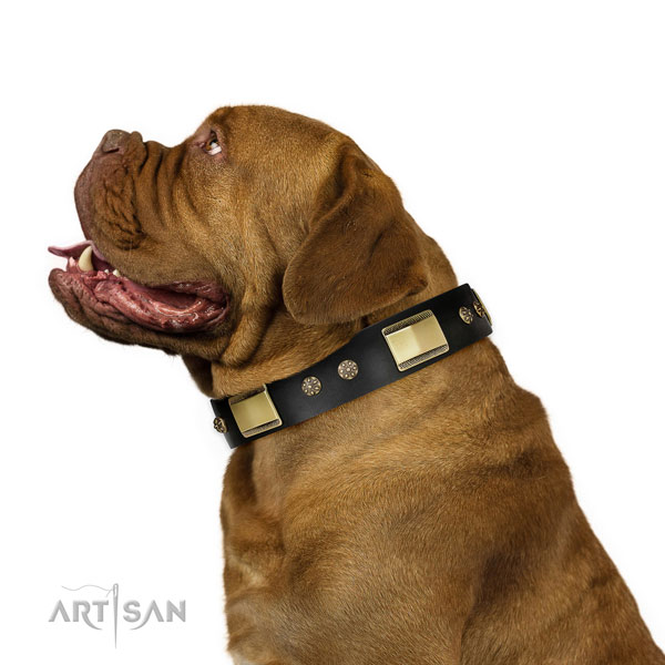 Comfy wearing dog collar of leather with impressive adornments