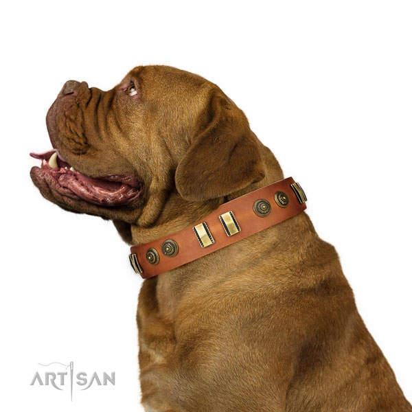 Corrosion resistant buckle on full grain leather dog collar for stylish walking