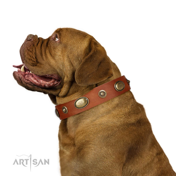 Walking dog collar of genuine leather with unusual adornments