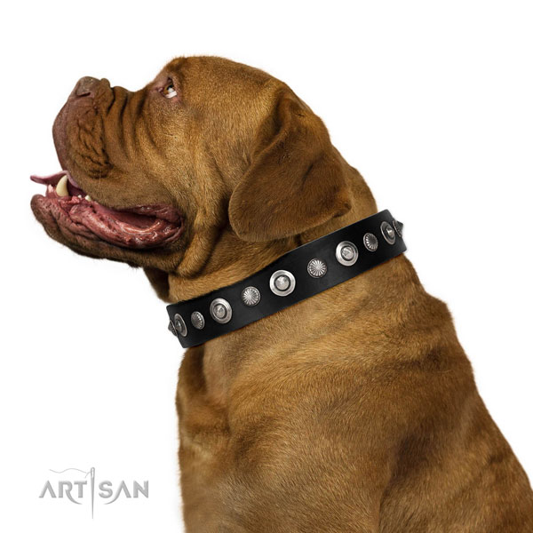 Finest quality full grain genuine leather dog collar with stylish adornments