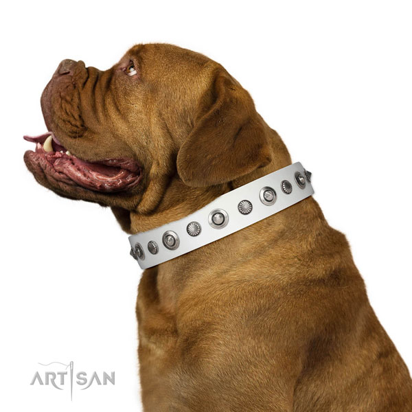 Full grain natural leather collar with durable traditional buckle for your stylish canine