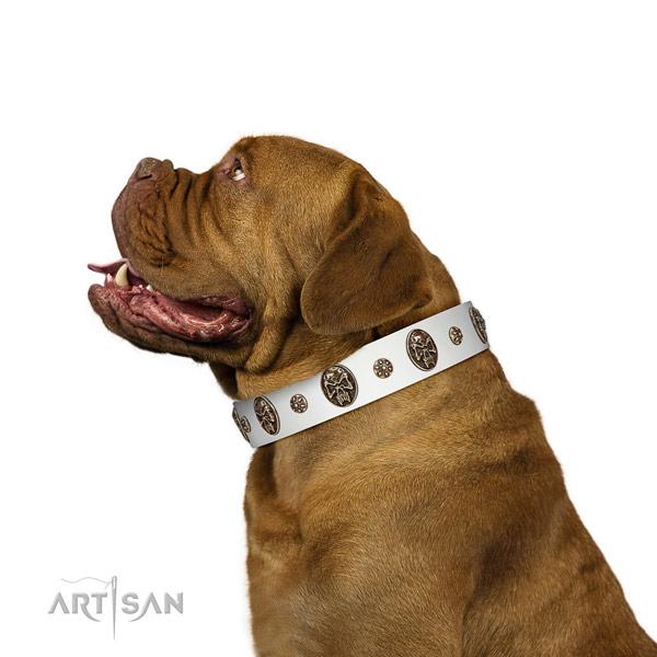 Fancy walking dog collar of leather with remarkable decorations