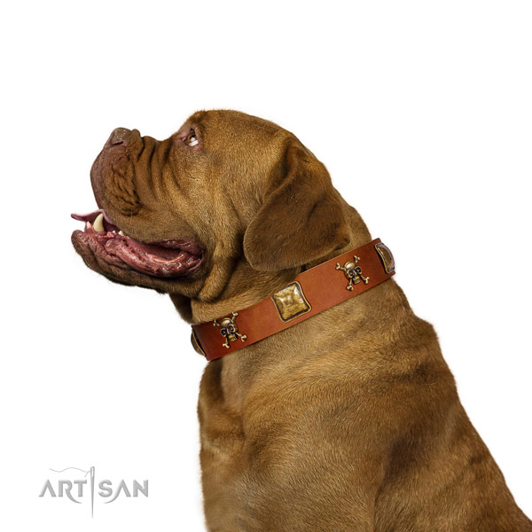 Significant full grain natural leather dog collar with corrosion proof adornments