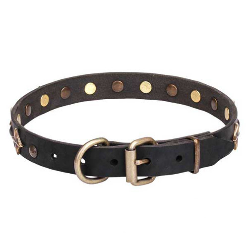 Dogue de Bordeaux collar with reliable bronze-plated buckle