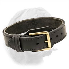 Attack Training Dogue de Bordeaux Collar with Brass Plated Buckle