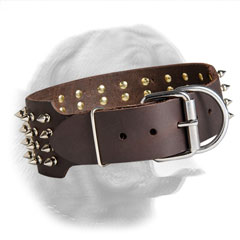 Securely riveted Dogue de Bordeaux collar