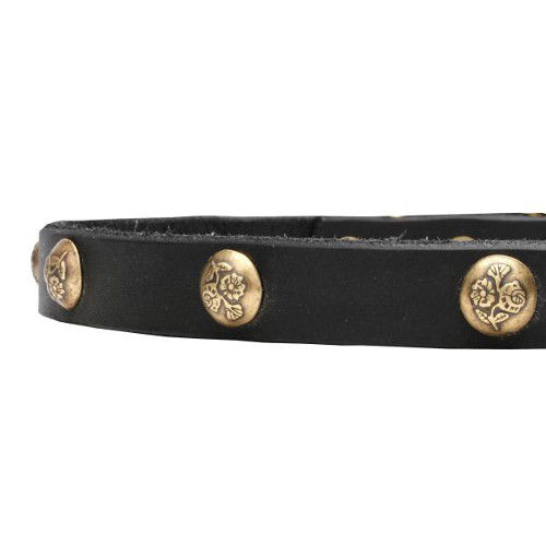 Leather dog collar with riveted studs