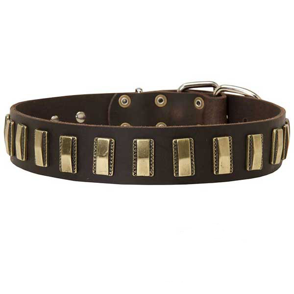 Strong leather collar with brass covered decorations