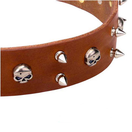 Reliable dog collar with skulls and spikes