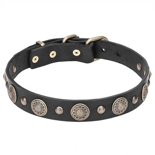 Dogue de Bordeaux genuine leather collar with rust-resistant studs
