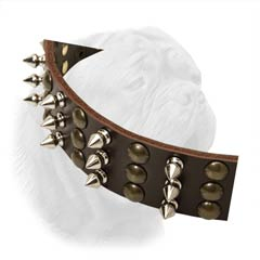 Dogue de Bordeaux Wide Leather Buckle Collar Decorated with Interchanging Columns of Spikes and Studs