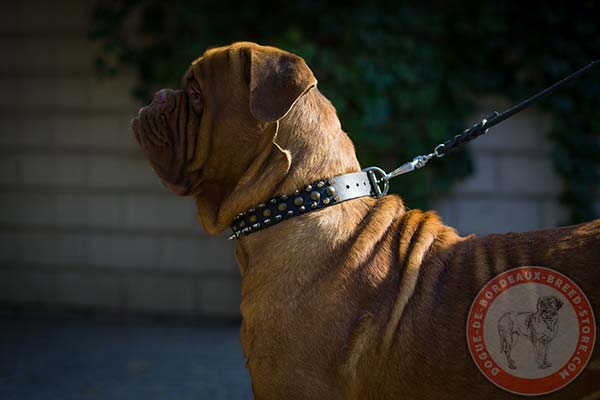 Dogue de Bordeaux collar with spikes and studs