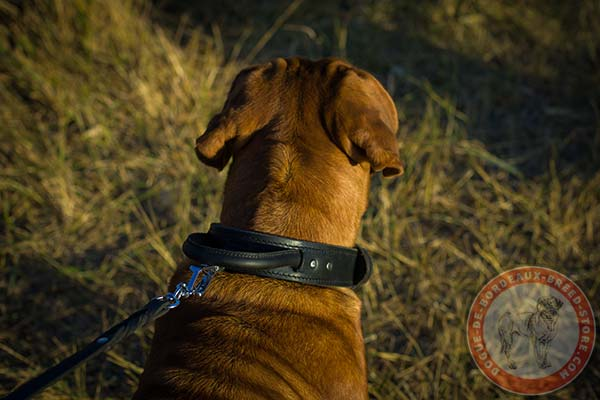 Dogue de Bordeaux collar with brass hardware