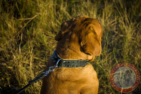 Dogue de Bordeaux collar with strong buckle and D-ring