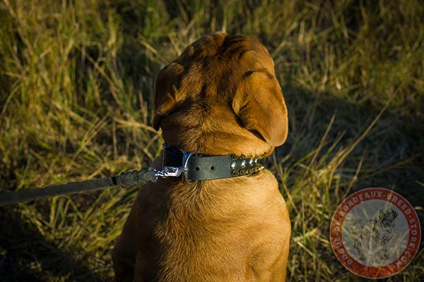 Dogue de Bordeaux collar with nickel plated hardware