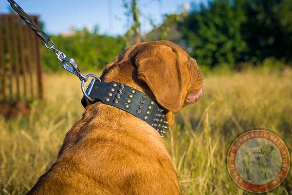 Dogue de Bordeaux collar with sturdy hardware