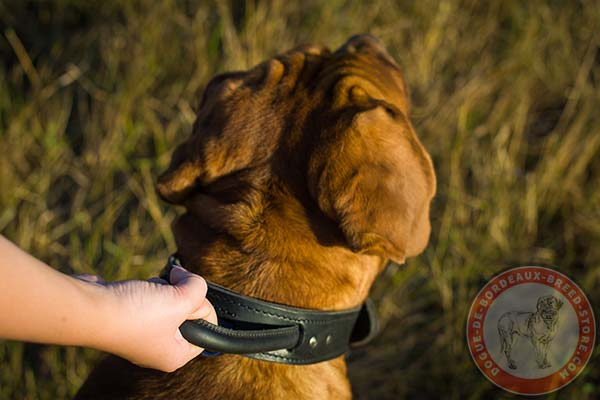 Dogue de Bordeaux collar with stitched handle