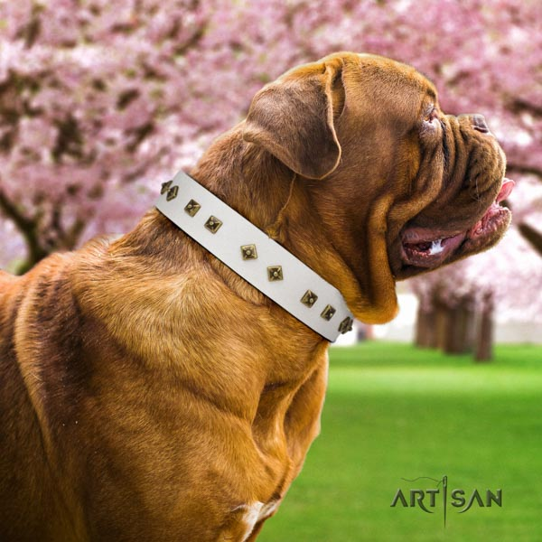 Dogue de Bordeaux trendy natural genuine leather collar for stylish walking