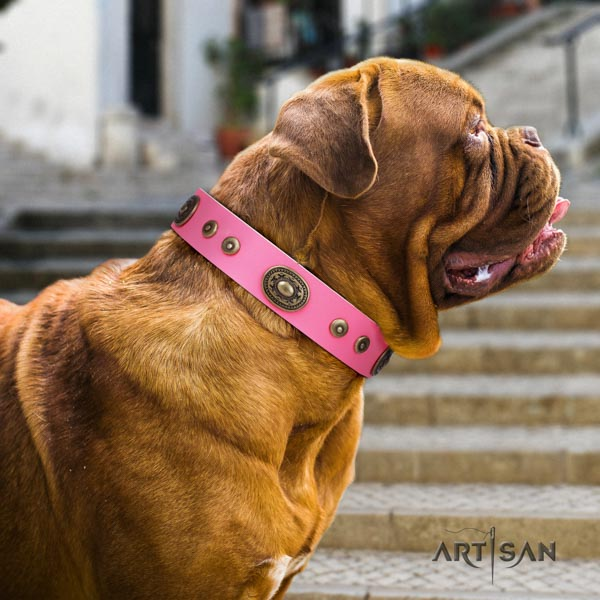 Dogue de Bordeaux embellished leather collar with durable traditional buckle