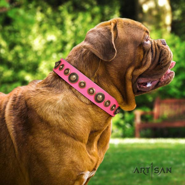 Dogue de Bordeaux unusual full grain leather collar for fancy walking