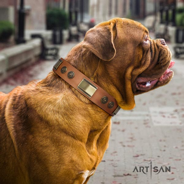 Dogue de Bordeaux trendy natural genuine leather collar for daily use