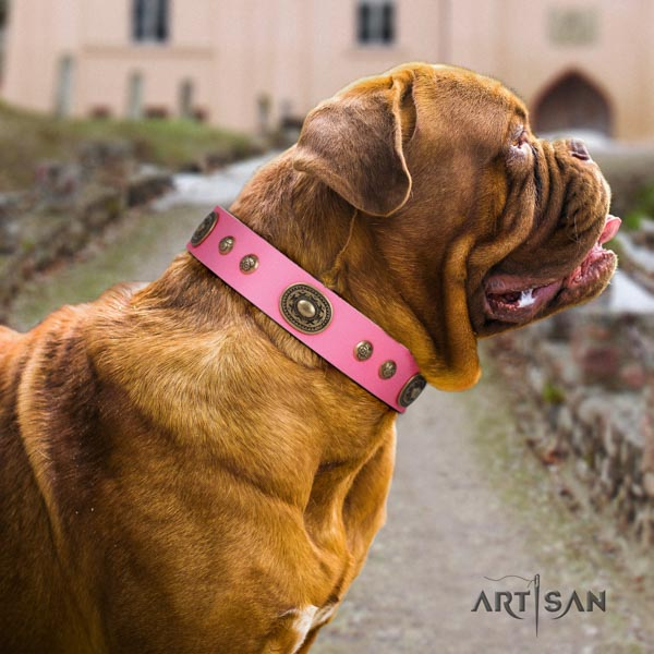 Dogue de Bordeaux unique natural genuine leather collar for everyday walking