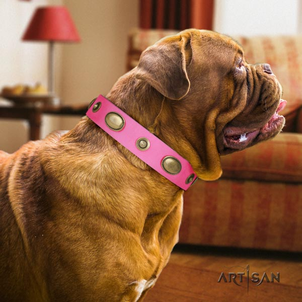 Dogue de Bordeaux incredible natural genuine leather collar for walking