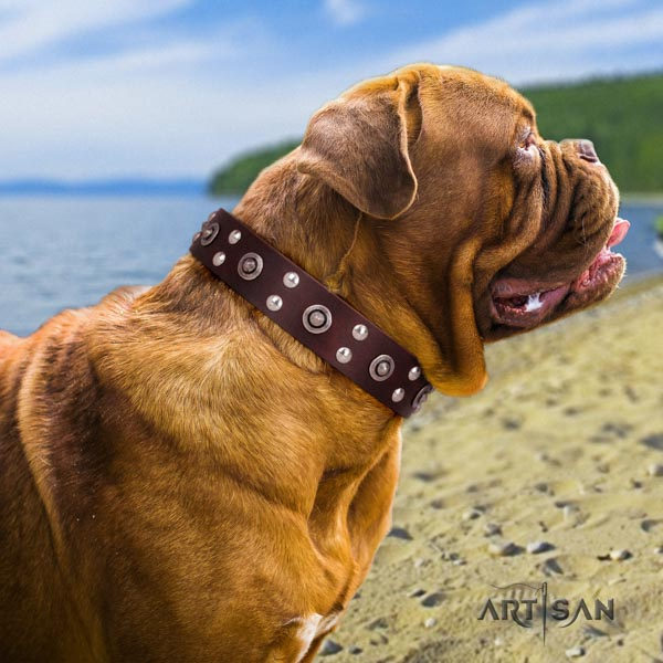 Dogue de Bordeaux impressive leather collar for easy wearing