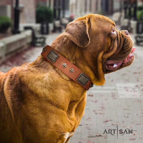 Dogue de Bordeaux trendy genuine leather collar for easy wearing