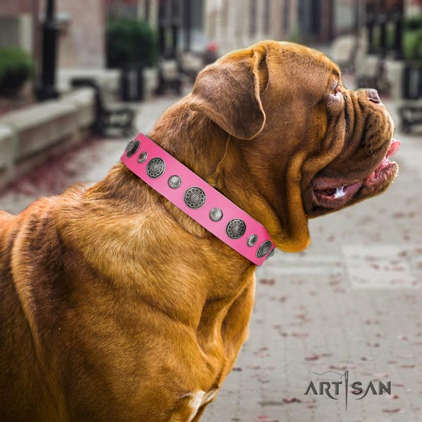 Dogue de Bordeaux awesome full grain genuine leather collar for everyday use