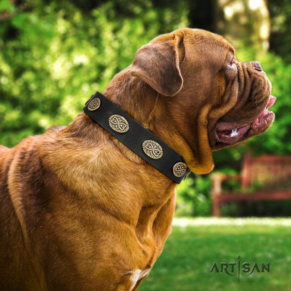 Dogue de Bordeaux exceptional full grain leather collar for everyday use